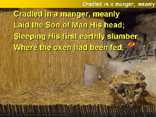 Cradled in a manger